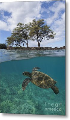 Turtle At Makena Landing Metal Print