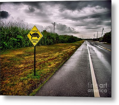 Turtle Crossing Area Metal Print by Mark Miller