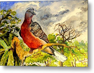Turtle - Dove Metal Print