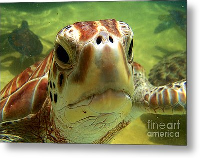 Turtle Face Metal Print by Carey Chen