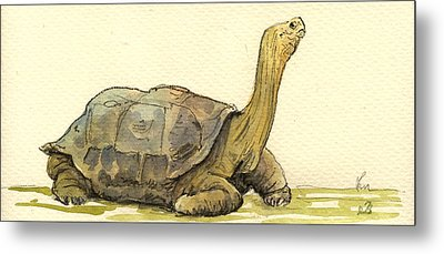 Turtle Galapagos Metal Print by Juan  Bosco