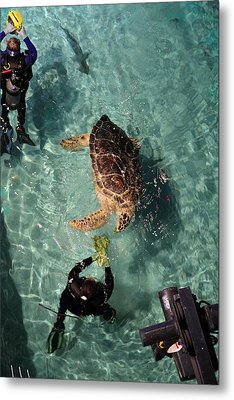 Turtle - National Aquarium In Baltimore Md - 121217 Metal Print by DC Photographer