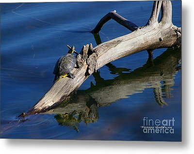 Metal Print featuring the photograph Turtle Sun by Tannis  Baldwin