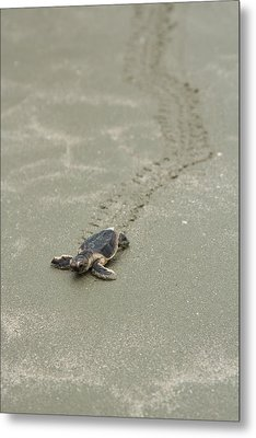 Metal Print featuring the photograph Turtle Tracks by Patricia Schaefer