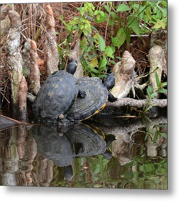Turtles  Metal Print by Julie Cameron