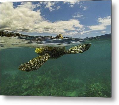 Turtles Need Air Too Metal Print by Brad Scott
