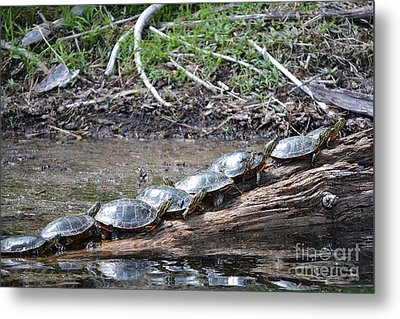 Turtles Metal Print by Terrance Byrd