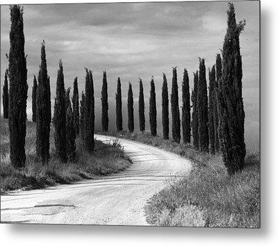 Tuscan Cedars Metal Print