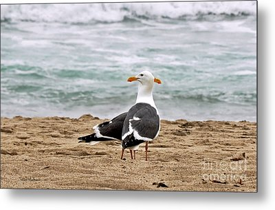 Twin Beaks Metal Print by Susan Wiedmann