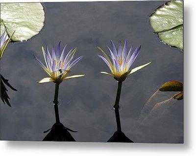 Twin Blue Egyptian Lotus Waterlilies And Dragonfly Metal Print by Byron Varvarigos