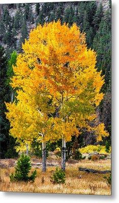 Twin Fall Trees Metal Print