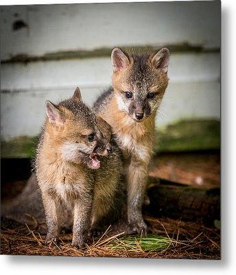 Twin Fox Kits Metal Print by Paul Freidlund