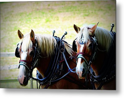 Metal Print featuring the photograph Twin Horses by Cathy Shiflett