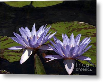 Twin Lavender Tropical Waterlilies Metal Print by Byron Varvarigos
