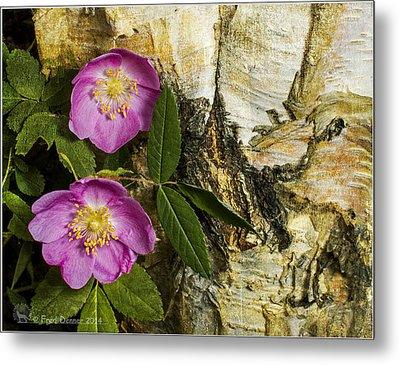 Twin Wild Roses Metal Print