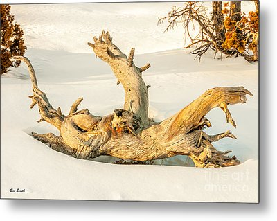 Twisted Dead Tree Metal Print