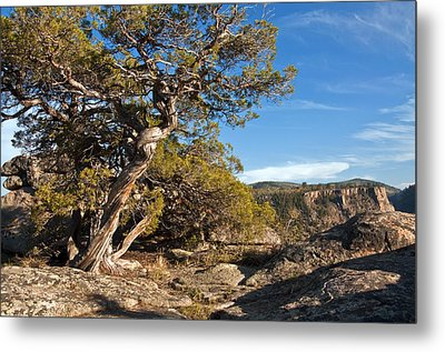 Metal Print featuring the photograph Twisted Existence by Eric Rundle