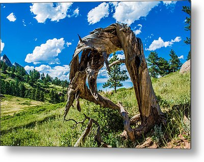 Metal Print featuring the photograph Twisted Pine by Rhys Arithson
