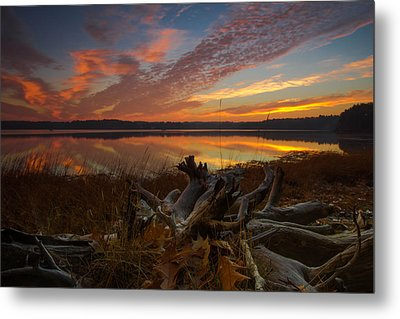 Twisted Roots Metal Print