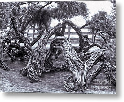 Twisted Tree - 01 Metal Print by Gregory Dyer