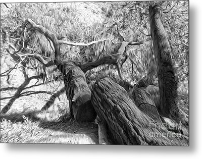 Twisted Tree - 03 Metal Print by Gregory Dyer