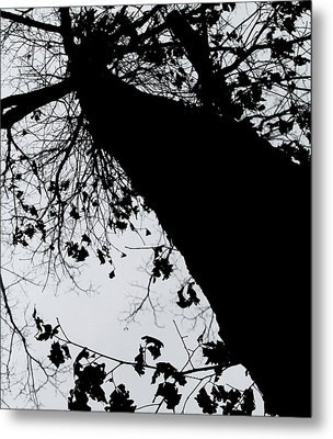 Metal Print featuring the photograph Twisted Tree by Candice Trimble