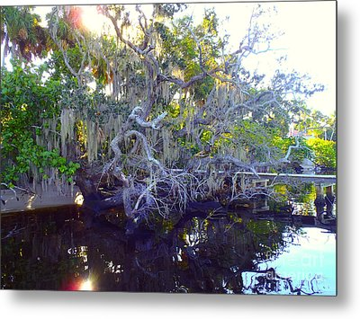 Twisted Tree Metal Print by Carey Chen