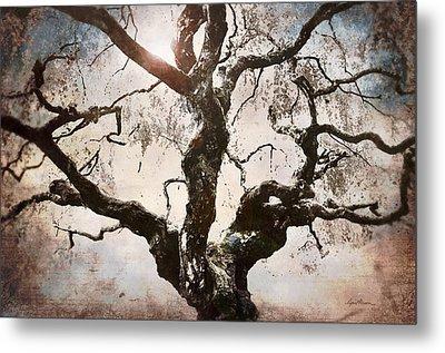 Twisted Tree I Metal Print