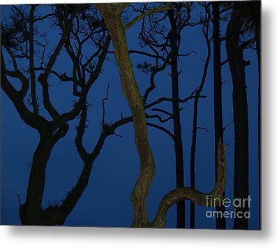 Twisted Trees At Twilight Metal Print by Anna Lisa Yoder