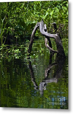 Metal Print featuring the photograph Twisted Wood by Ken Frischkorn
