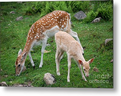 Two Babes Metal Print by Bianca Nadeau