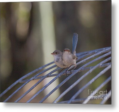 Two Birds On Wire Metal Print by Serene Maisey