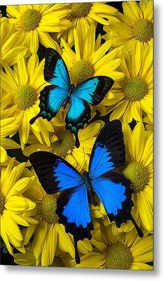 Two Blue Butterflies Metal Print