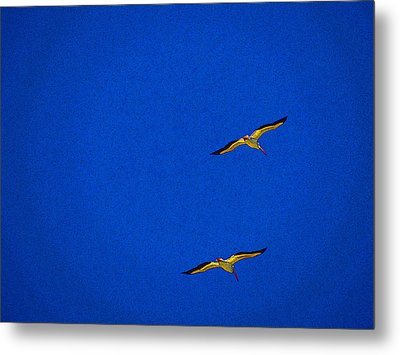 Metal Print featuring the photograph Two Blue by Tom DiFrancesca