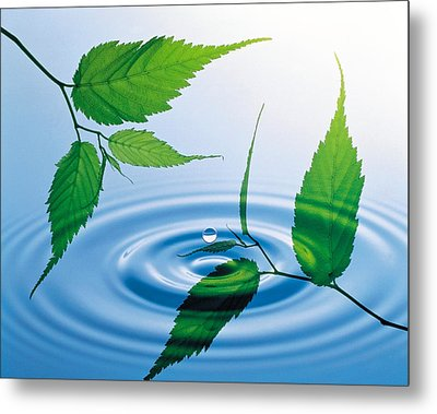 Two Branches With Green Leaves Floating Metal Print by Panoramic Images