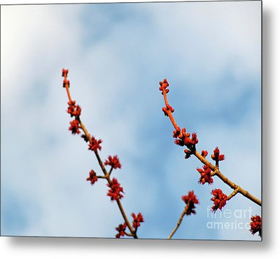 Two Budding Branches Metal Print by CML Brown