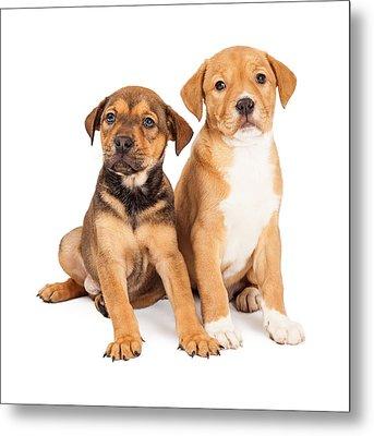 Two Cute Crossbreed Puppies Metal Print by Susan Schmitz