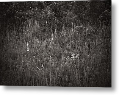 Metal Print featuring the photograph Two Deer Hiding by Bradley R Youngberg