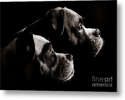 Two Dogs Metal Print by Jt PhotoDesign