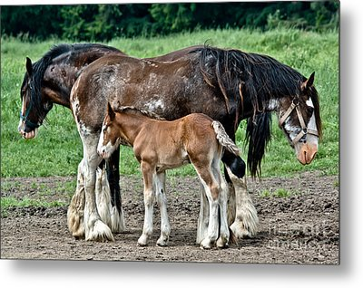 Two Drafts And A Half Metal Print by Cheryl Baxter