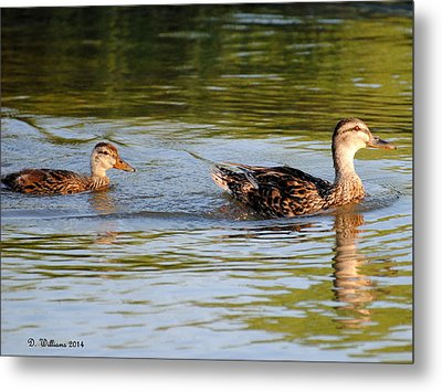 Two Ducks Swimming Metal Print