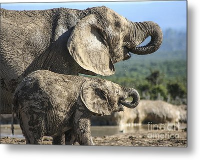 Two Ellies Drinking Metal Print
