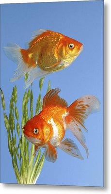 Two Fish Fs101 Metal Print by Greg Cuddiford