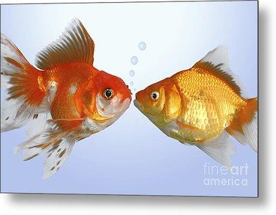 Two Fish Kissing Fs502 Metal Print by Greg Cuddiford