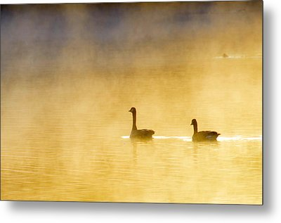 Two Geese Metal Print by Tommytechno Sweden