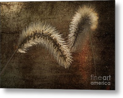 Two Grass Flowers Metal Print by Heiko Koehrer-Wagner