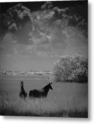 Metal Print featuring the photograph Two Horses by Bradley R Youngberg