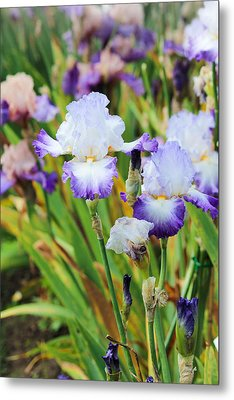 Metal Print featuring the photograph Two Iris by Patricia Babbitt