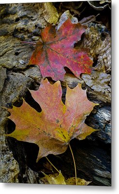 Two Leaves Metal Print