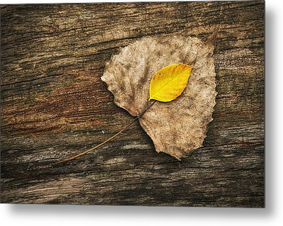 Two Leaves  Metal Print by Scott Norris